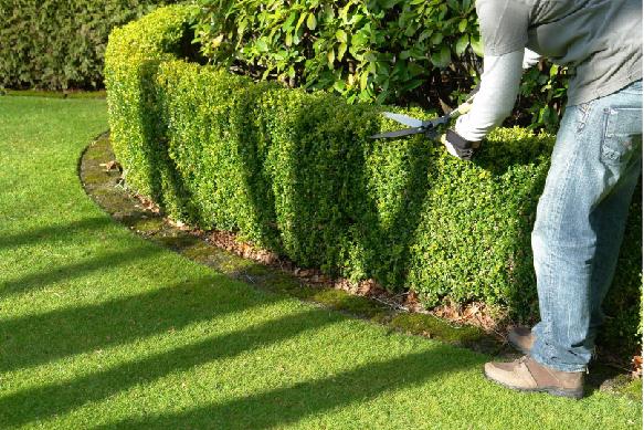 Jardineando-Servicios_1